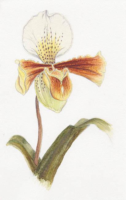 2018-mar-orchid-web.jpg