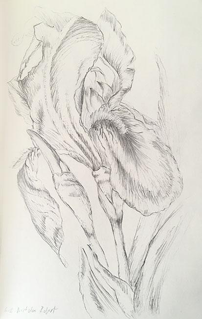 2018-iris-drawing-web.jpg