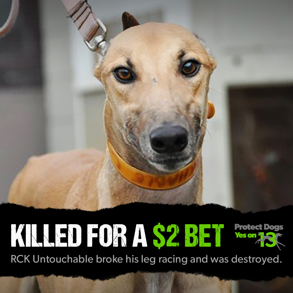 meme_Greyhound_RCK_Untouchable.jpg