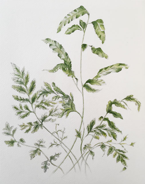 2018-fern-painting-web.jpg