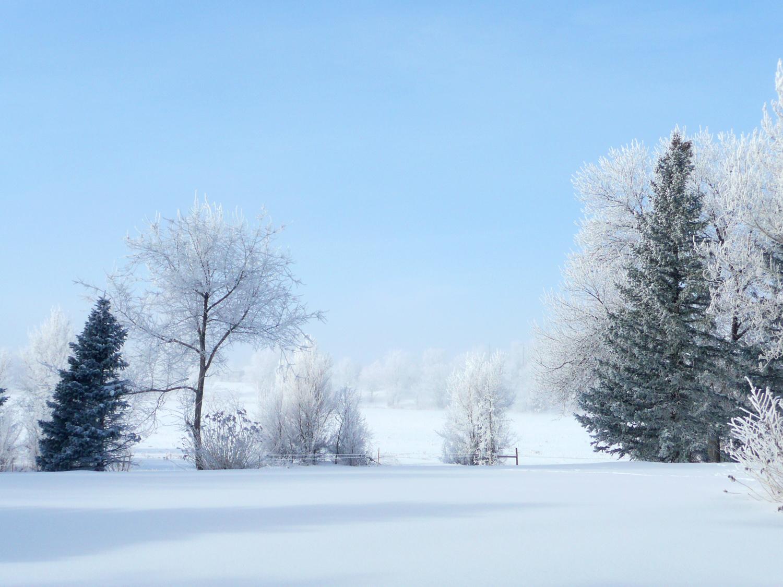 snowYard2.jpg