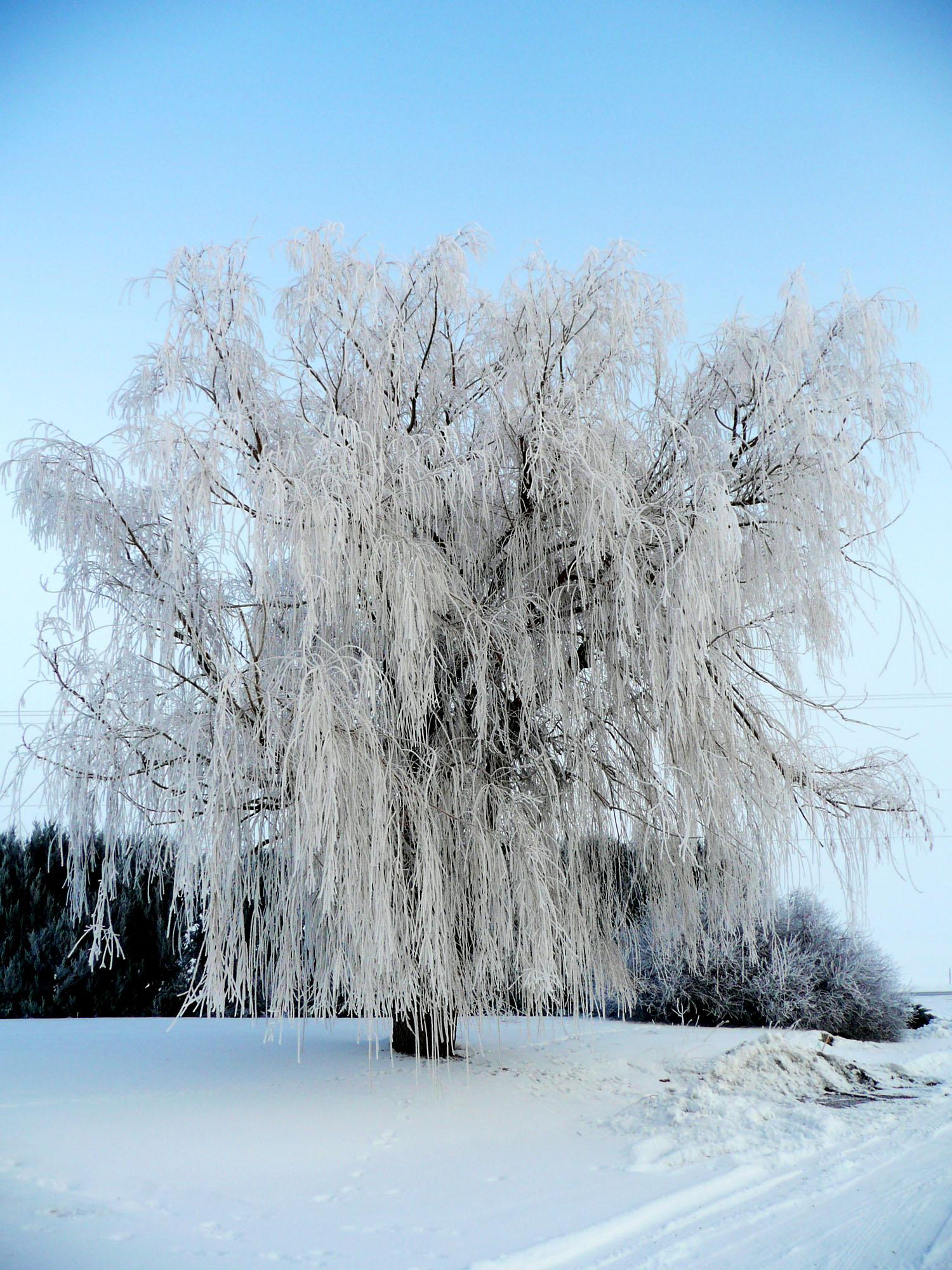 snowYard3.jpg