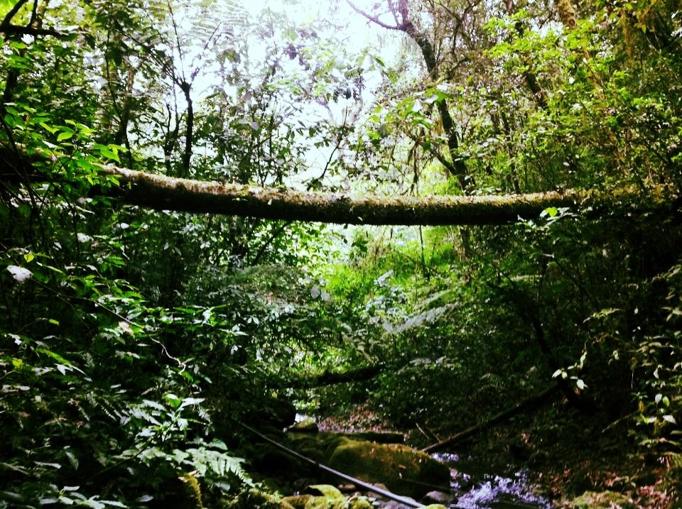 log bridge.jpg