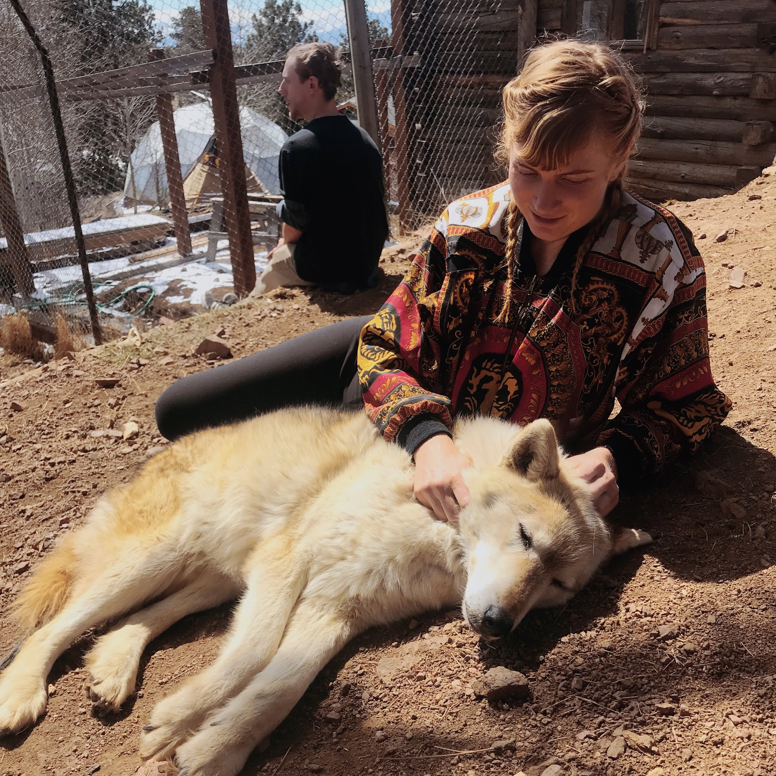 Mission: Wolf  - Wolf Sanctuary in Southern Colorado - Education versus Extinction - Calling us to question our relationship with the wild