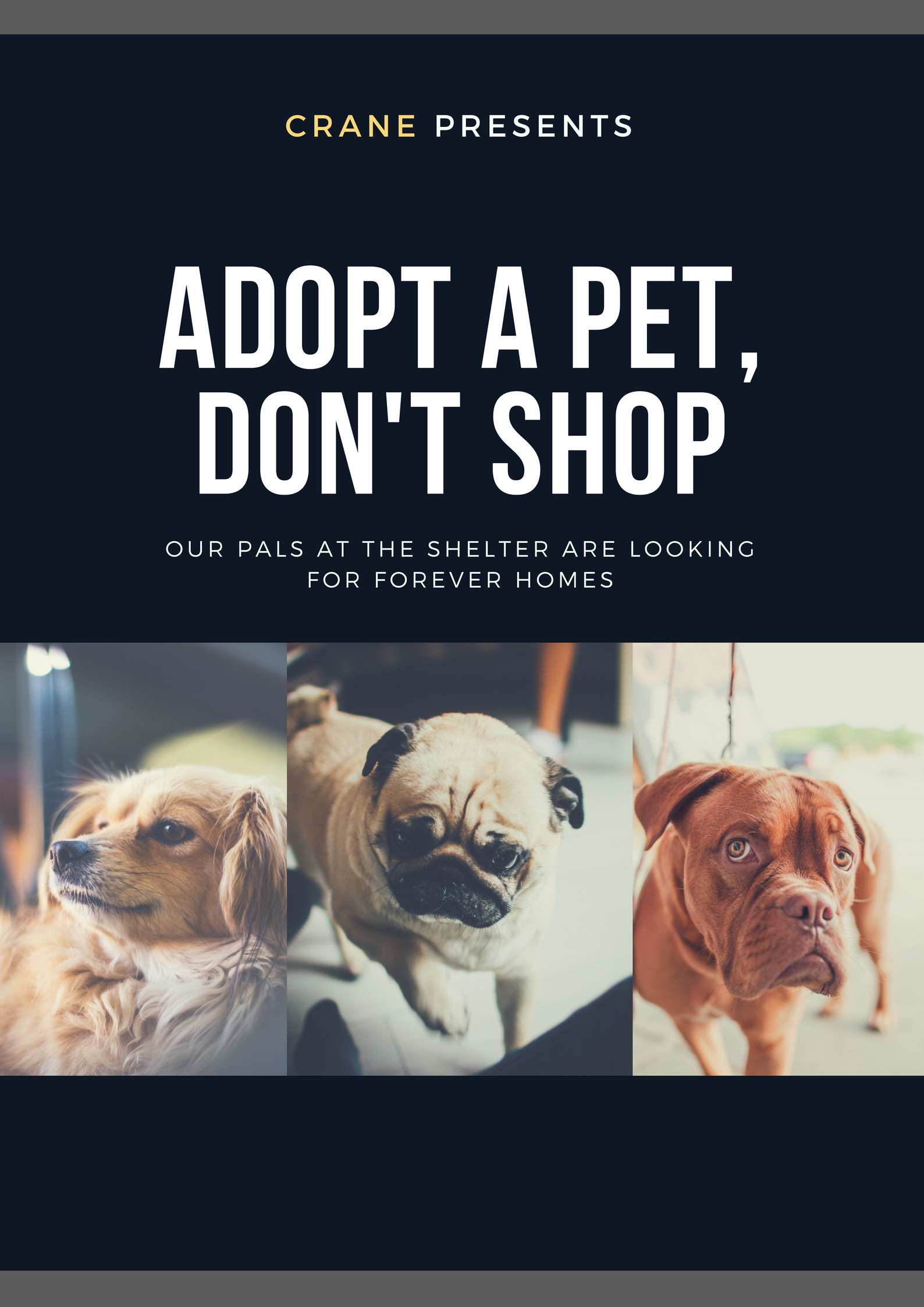 Would you like to have a companion? One that will love you unconditionally and will always stay cute and cuddly? Come meet some furry friends on our visit to the animal shelter, and learn what we can do to help.