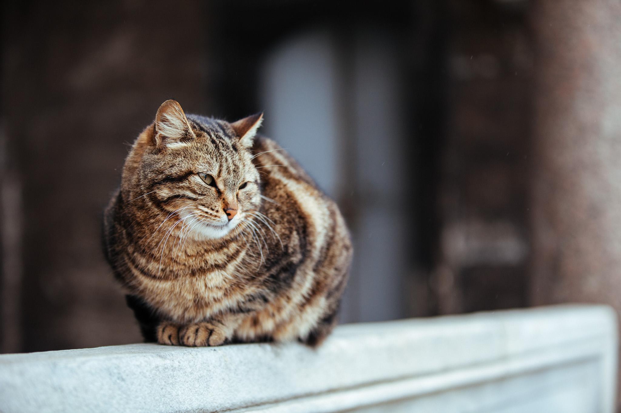 Cat outside the Hagia Sophia . Istanbul