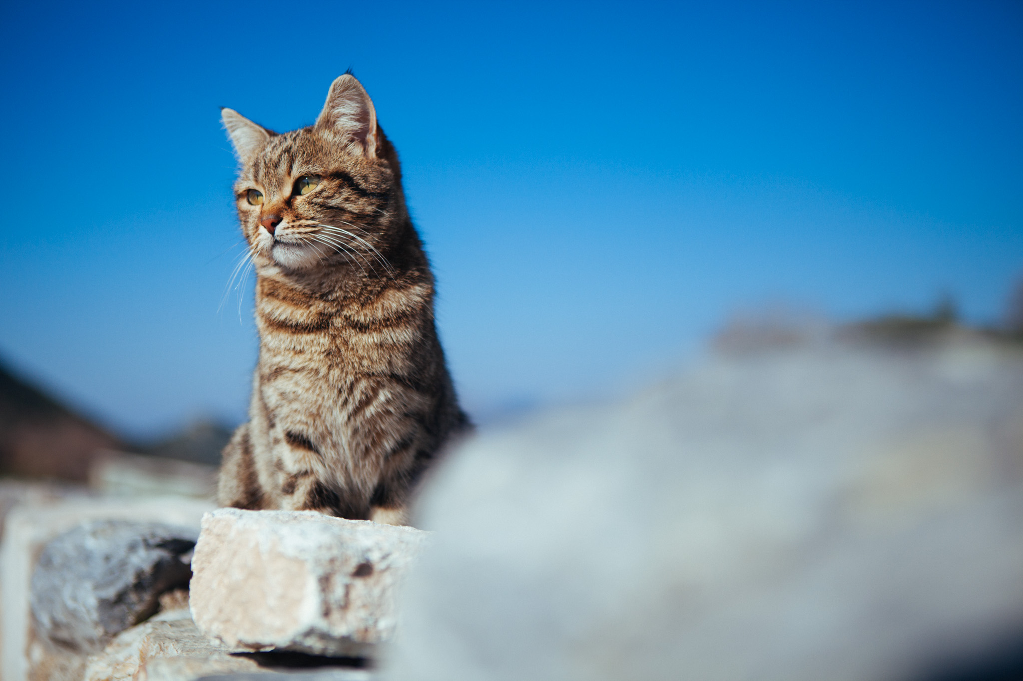 A regal looking cat posing along the ancient ruins of Ephesus.