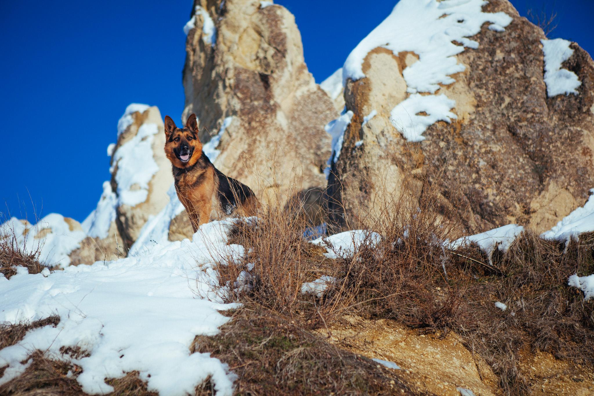 Met a friendly German Shepherd belonging to a local . Cappadocia Turkey
