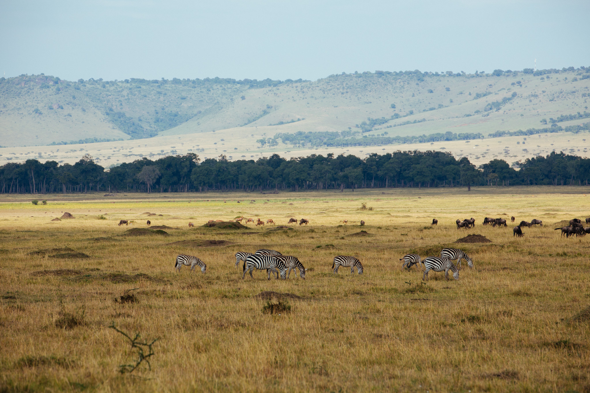 Just as we entered the Maasai Mara National Reserve…
