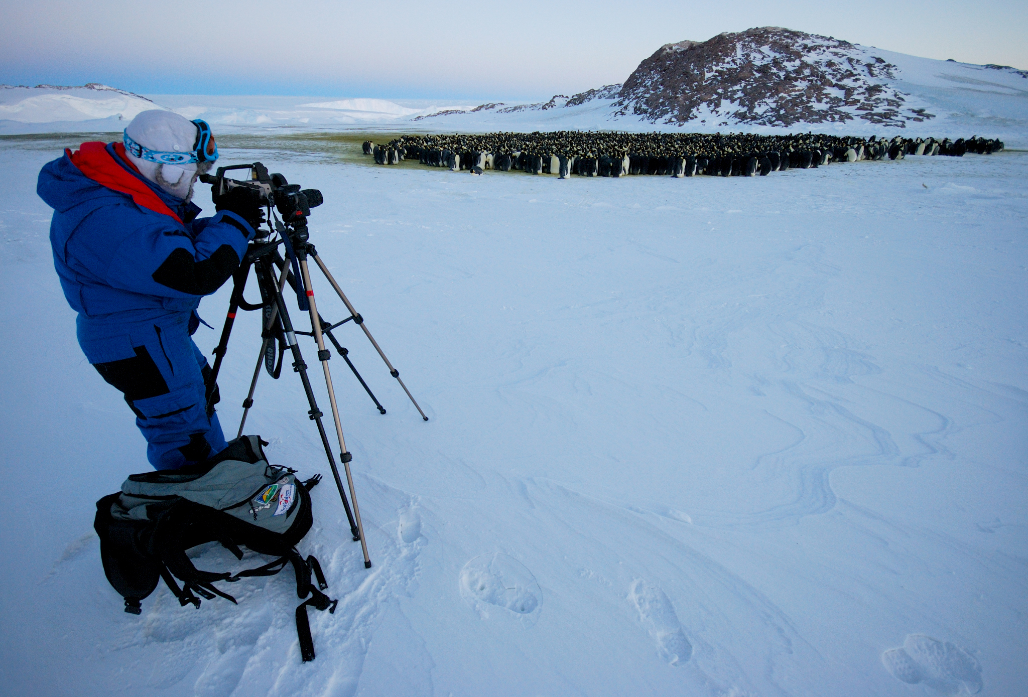 Thermal imaging Emperor Penguins in Terre Adélie, Antarctica