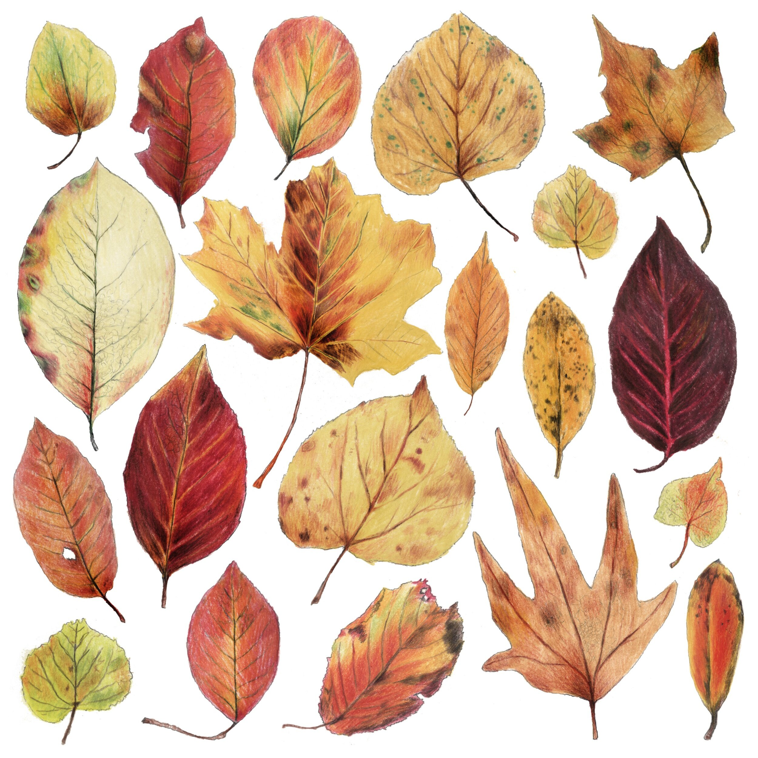 processed_autumn.jpg