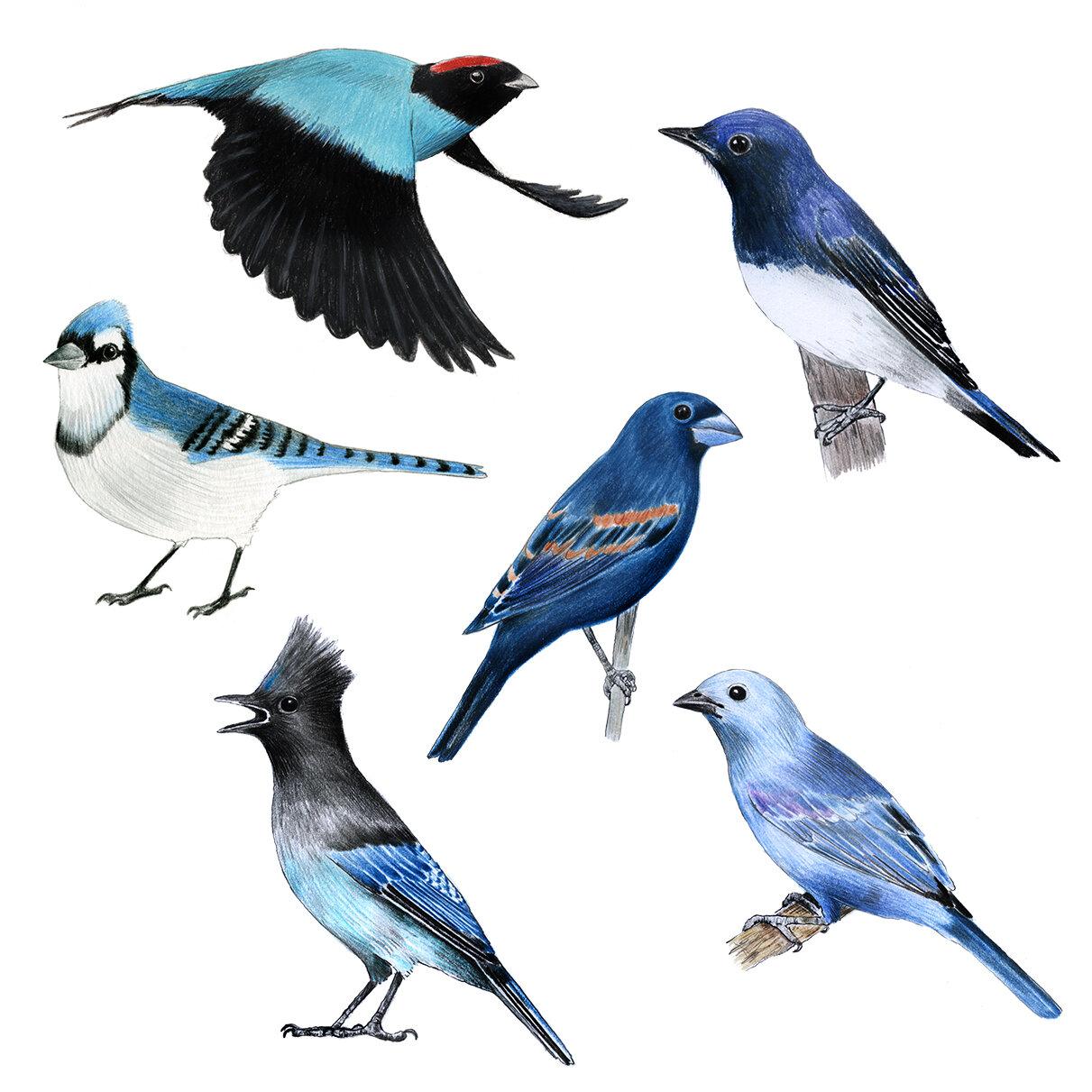 blue_birds.jpg
