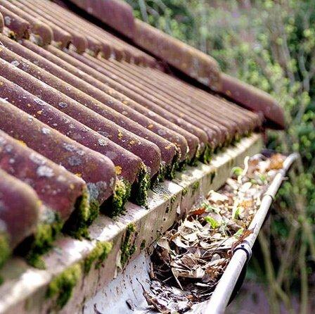 House-gutters-full-of-old-leaves.jpg