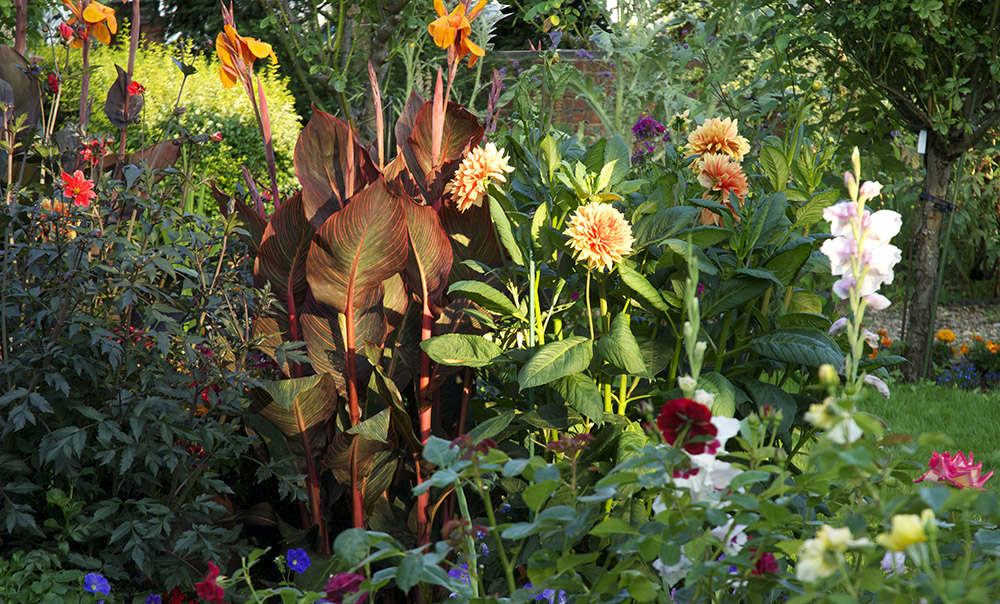 See more  garden  pictures.
