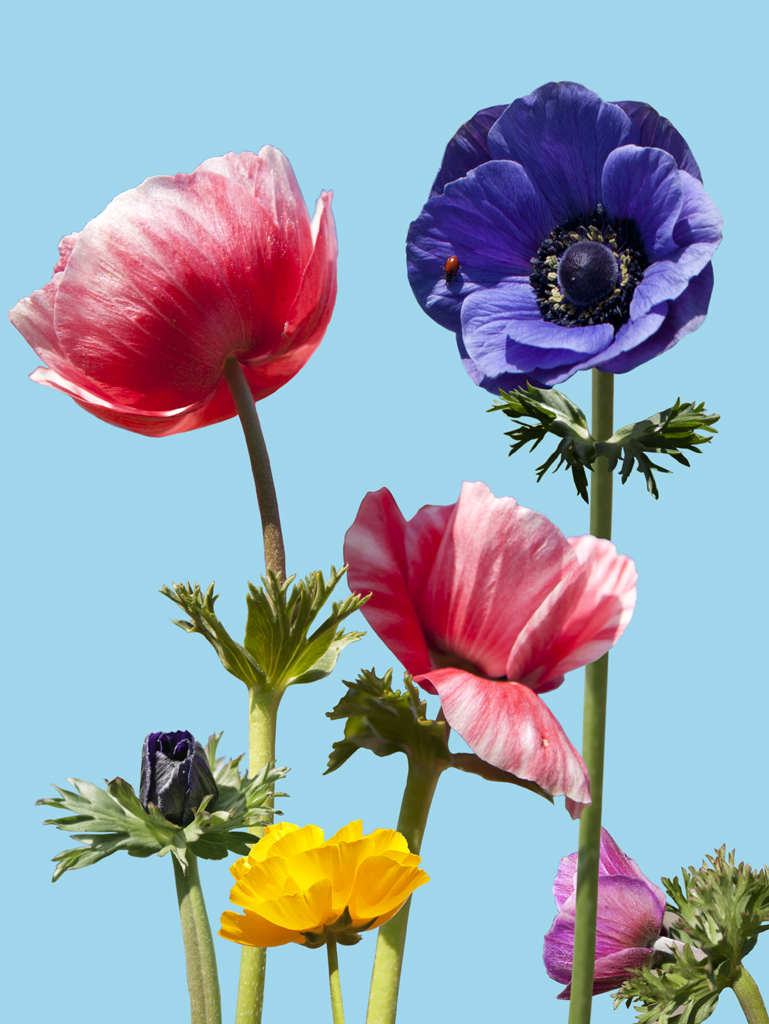 anemone.6.jpg