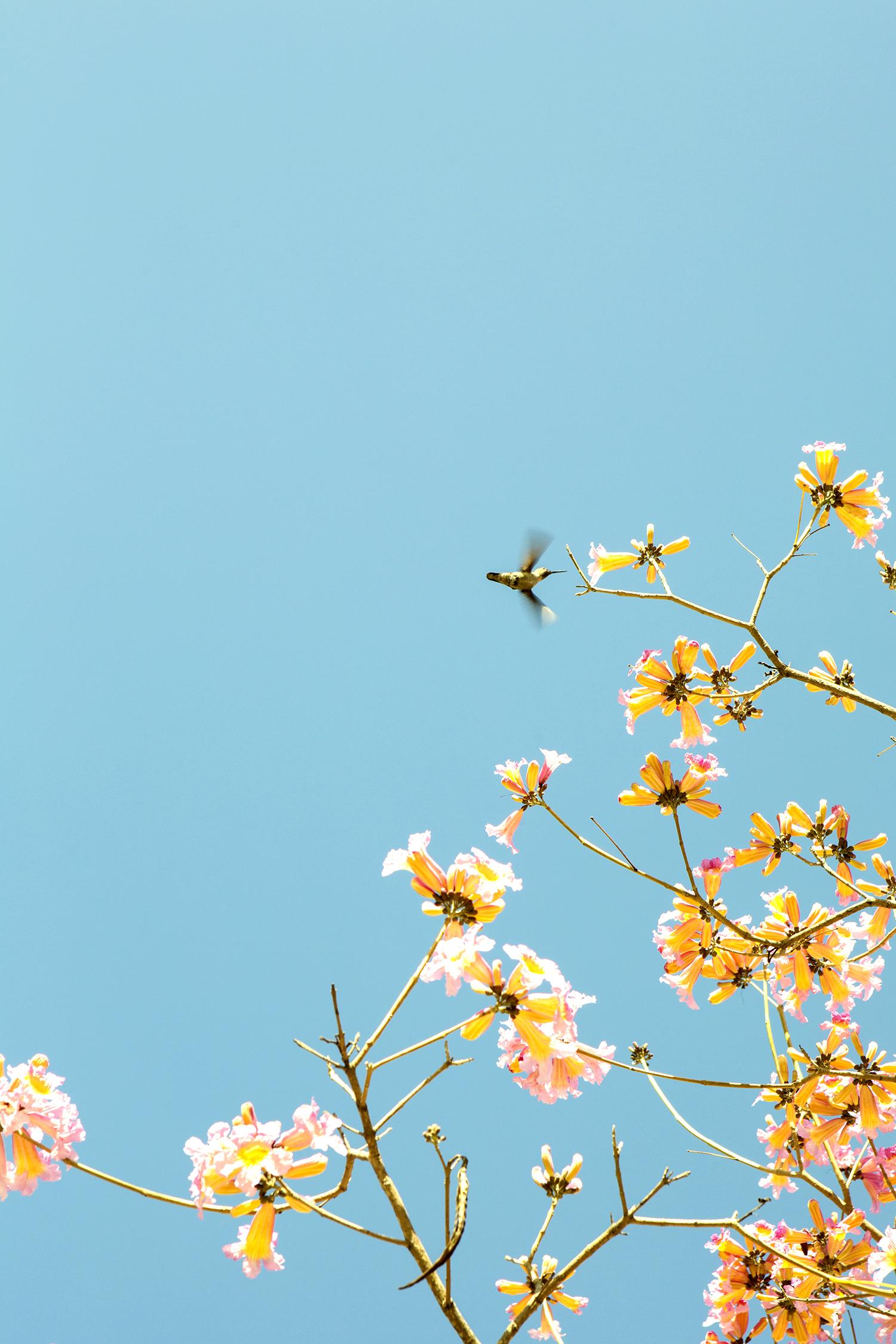 DK_FloweringTREE_sm.jpg