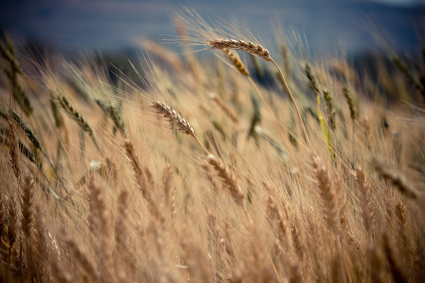 Ruth knew that the God of Israel had made a daily provision for the poor and the widows in the fields and she had faith in God's promises and provision. -