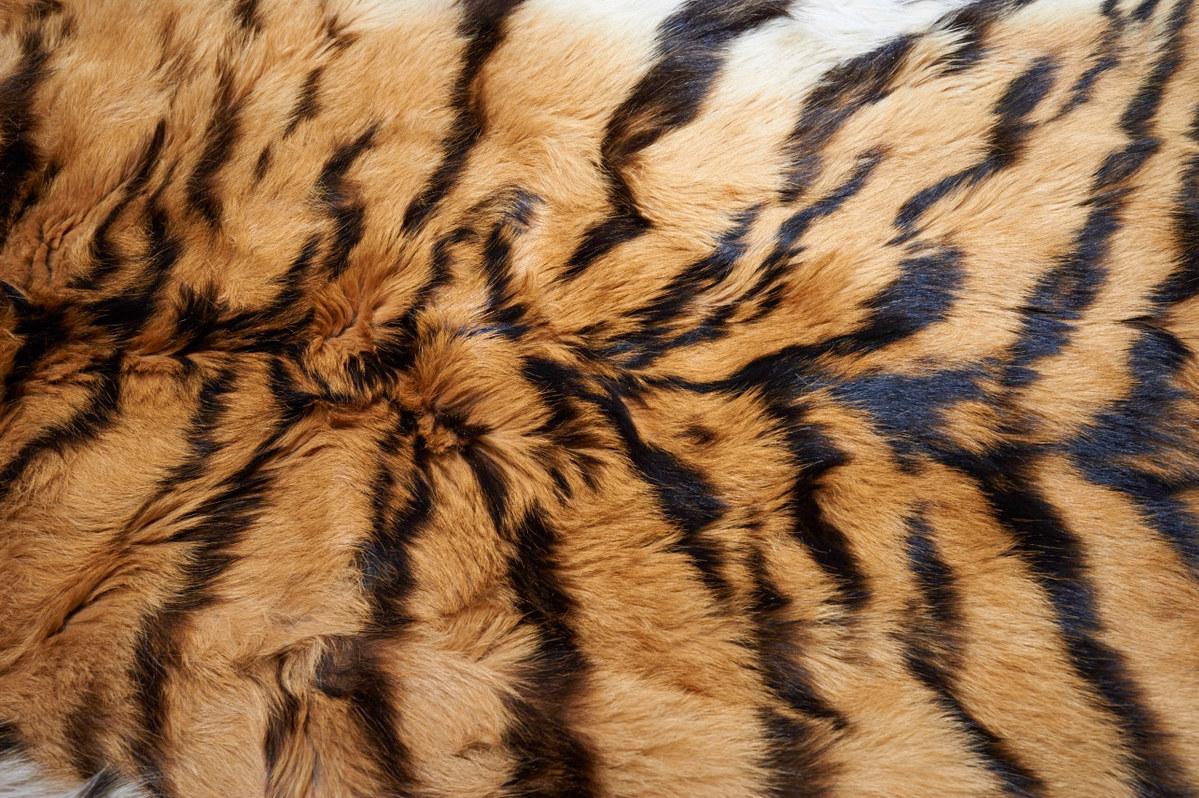 Tiger fur - Ola Jennersten - WWF - Sweden.jpg