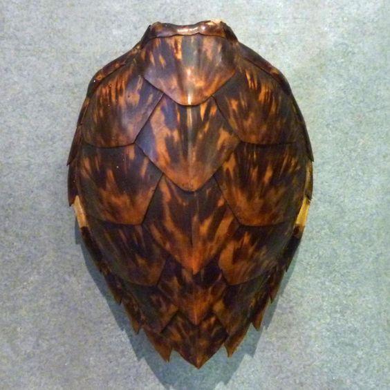Sea turtle shell - Pinterest.jpg