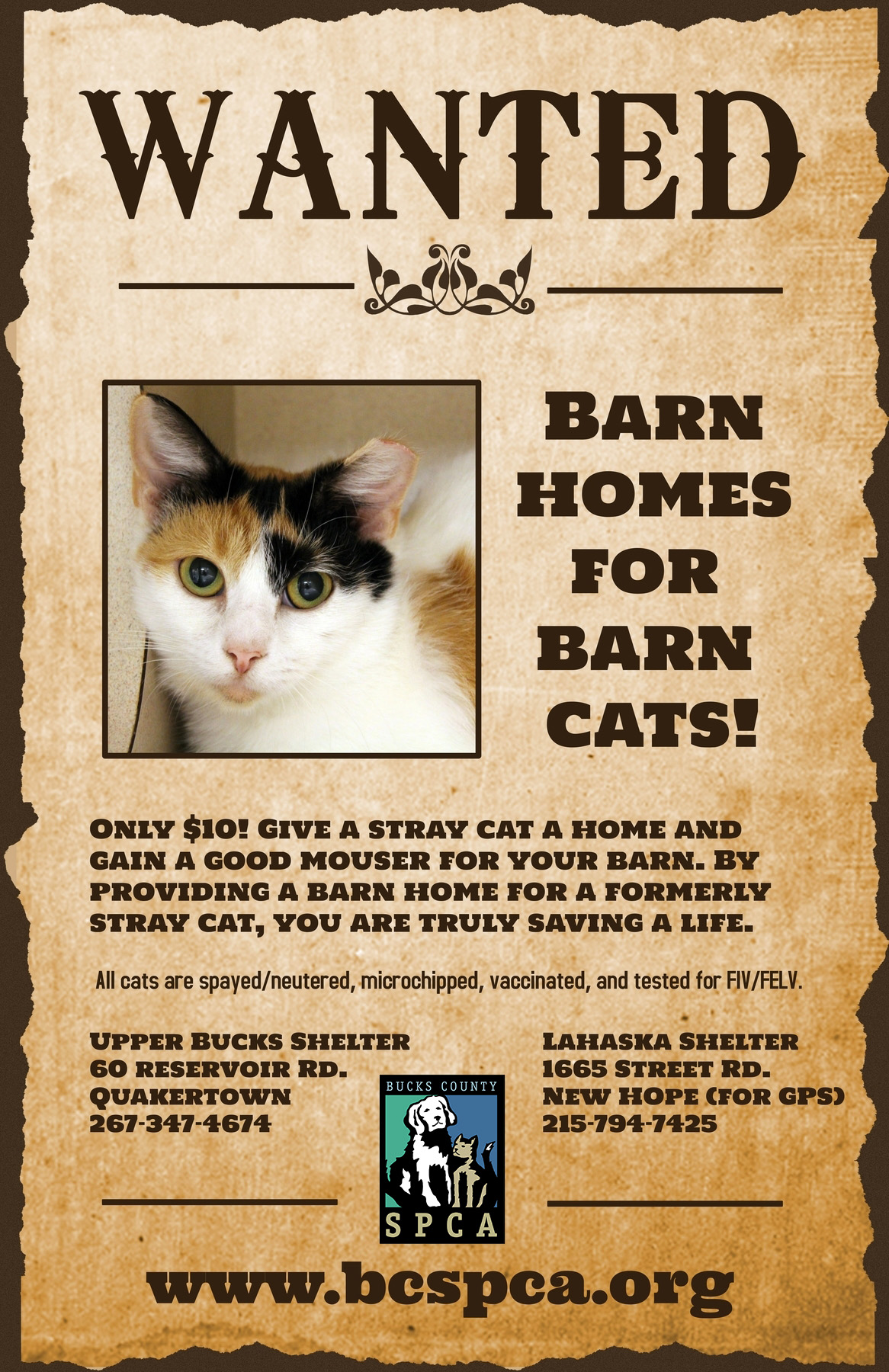 Barn-cat-wanted-BCSPCA-fb.jpg