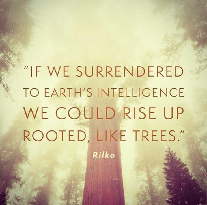 We would rise up rooted, like trees.jpg