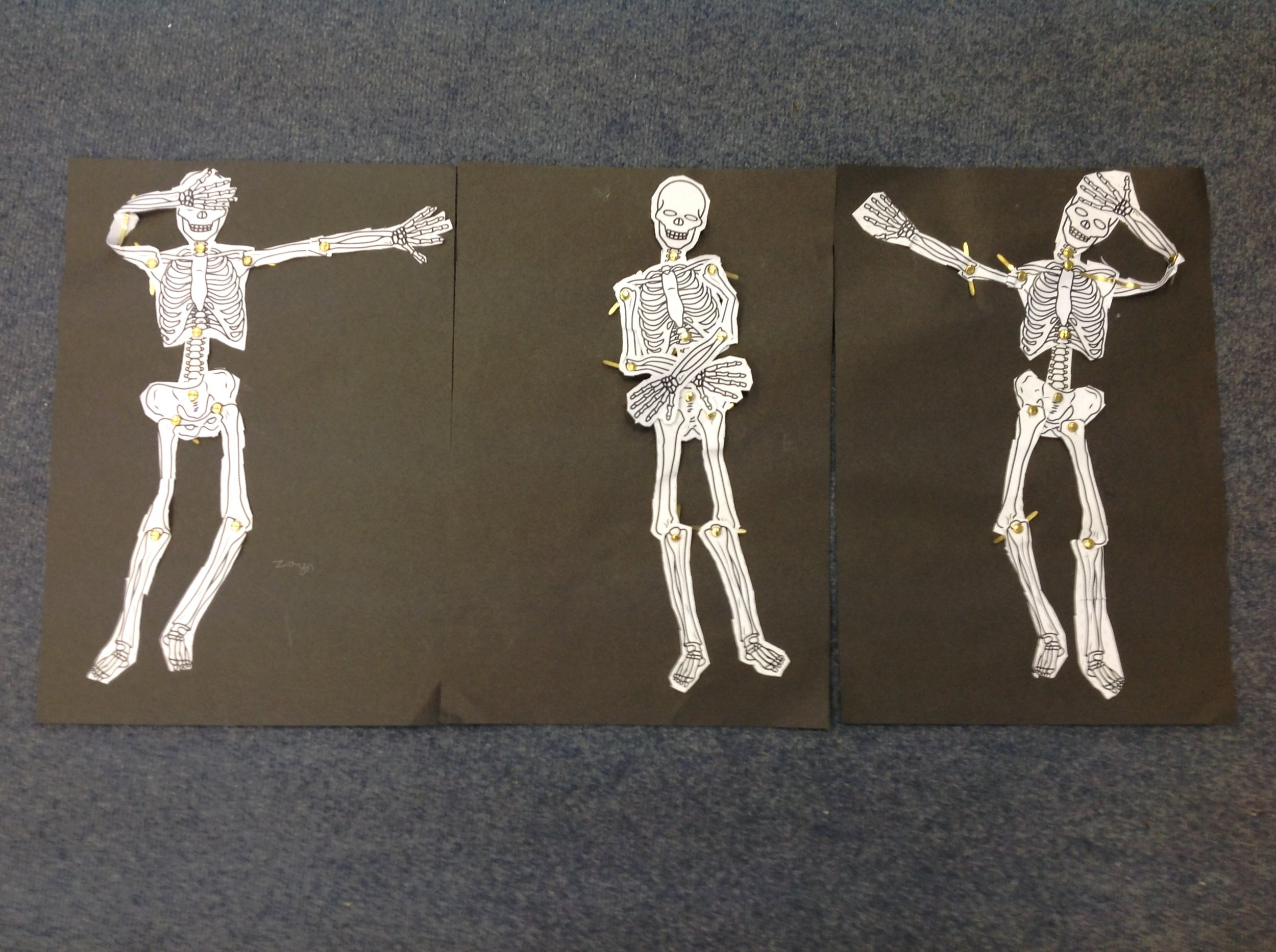 Skeletons made by Ed, Xavier and Zayn