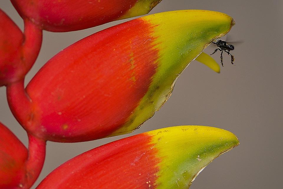flower-607908_960_720.jpg