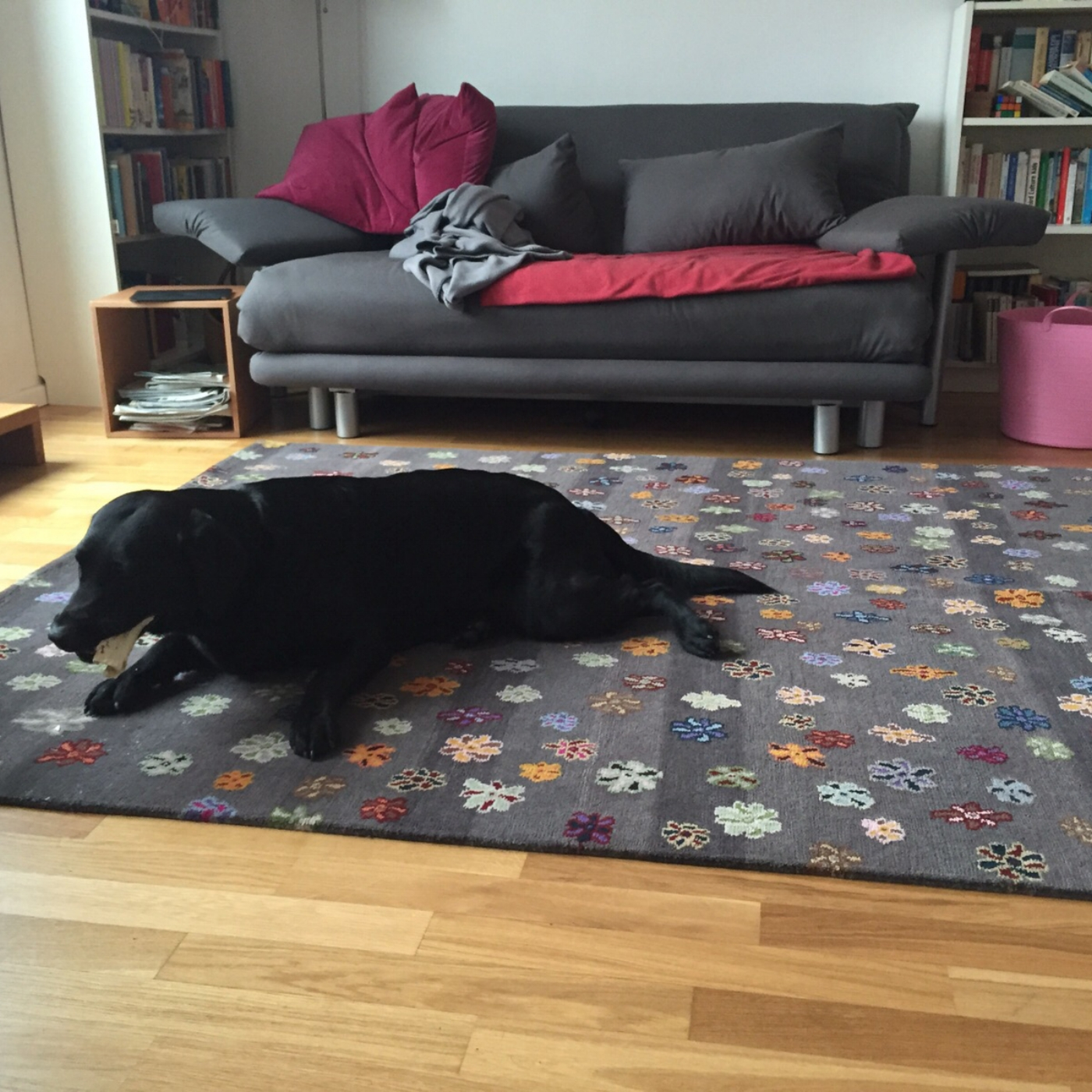 Dog on the rug - A JAN KATH CARPET FOR A PRIVATE DOG-LOVING HOME