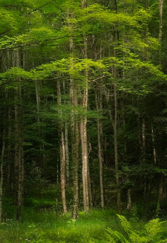 Whitmer Tree
