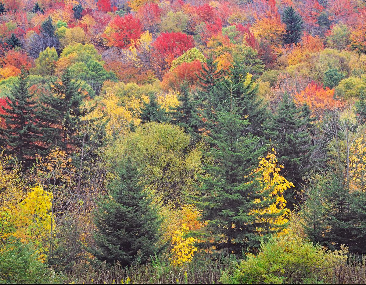 Autumn on Highland Scenic Highway