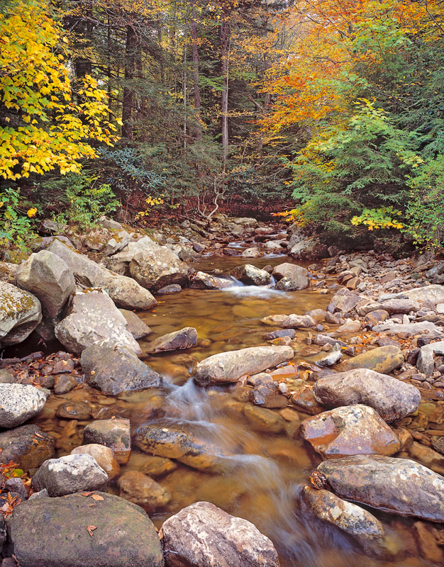 Tea Creek in Monongahela National Forest