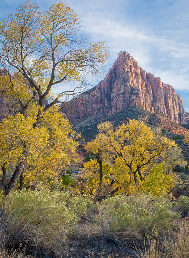 Cottonwoods and Watchman