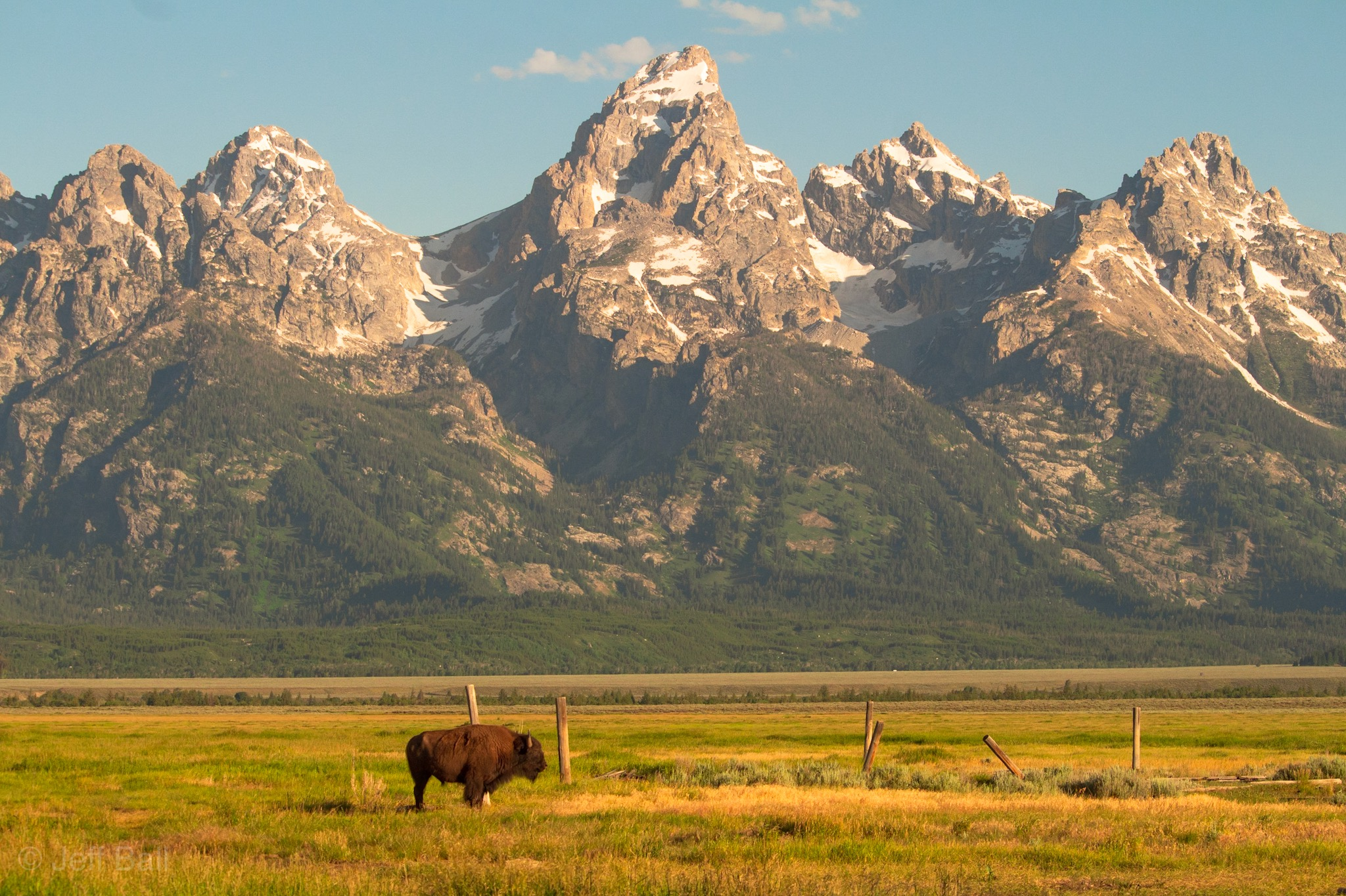 American Bison and Grand Tetons