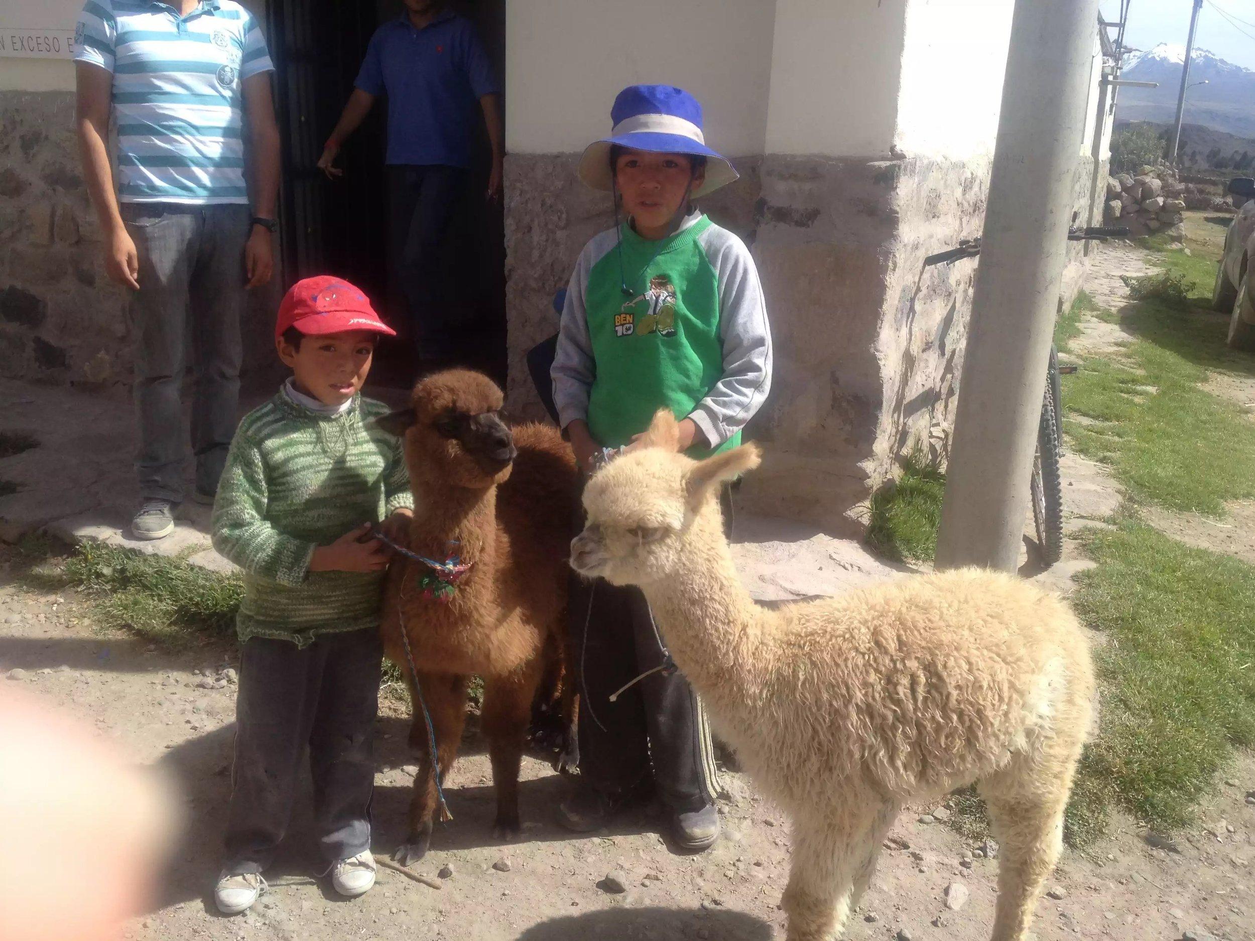 Local boys, with their baby Alpaca's