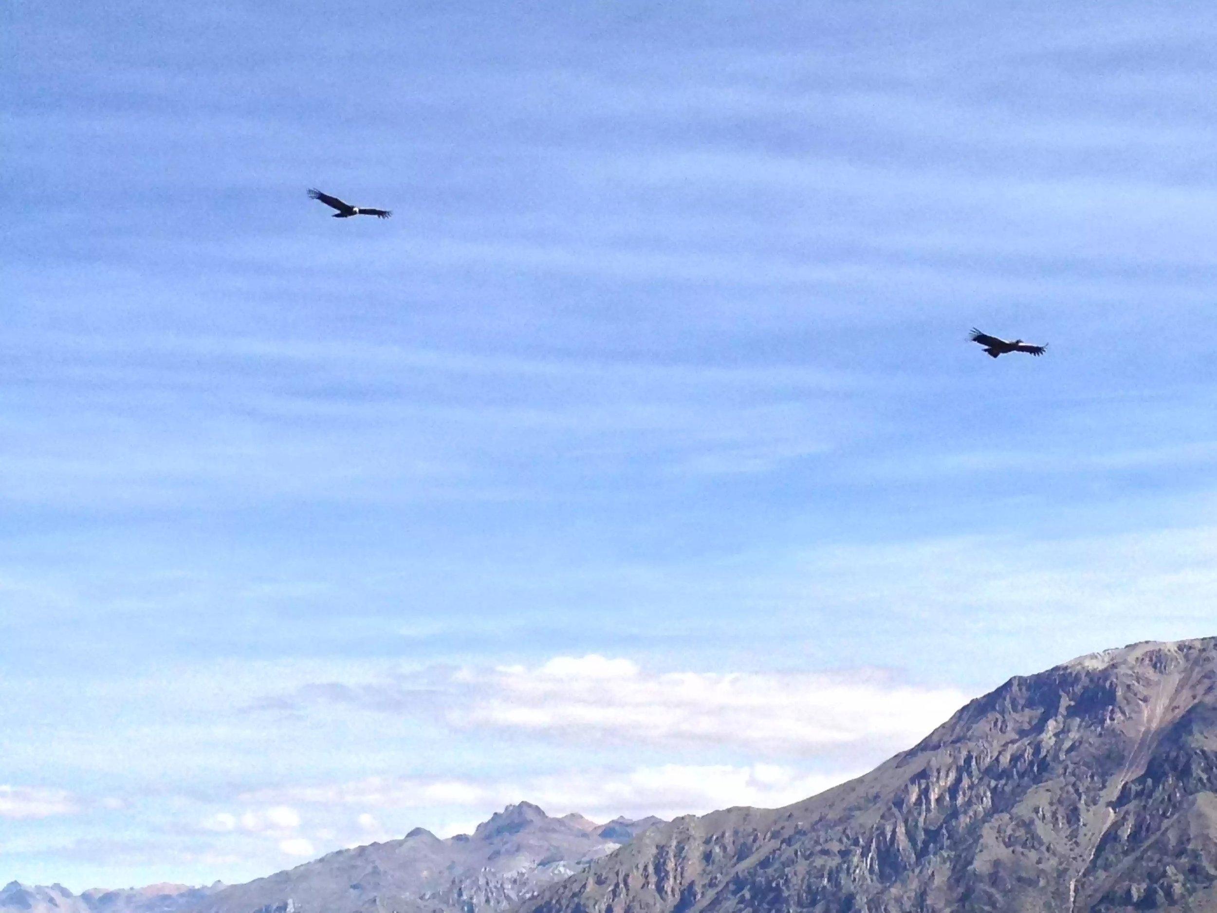 Magnificent Condors soaring above.