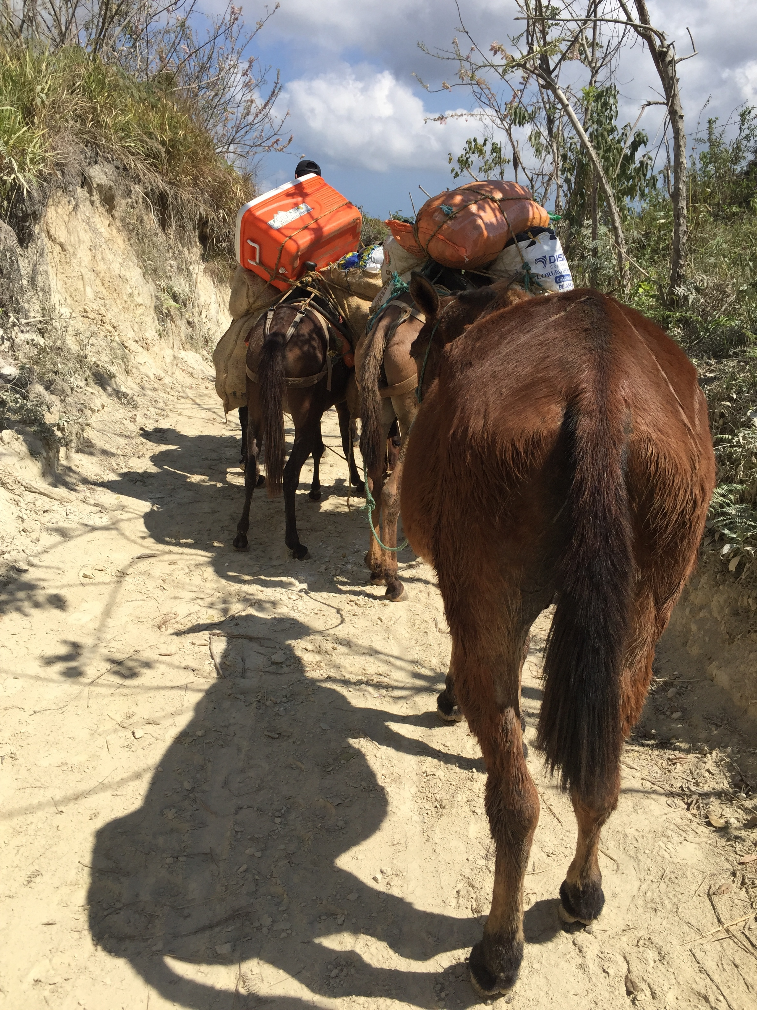 I flew off ahead, trying to capture a video of the mules.