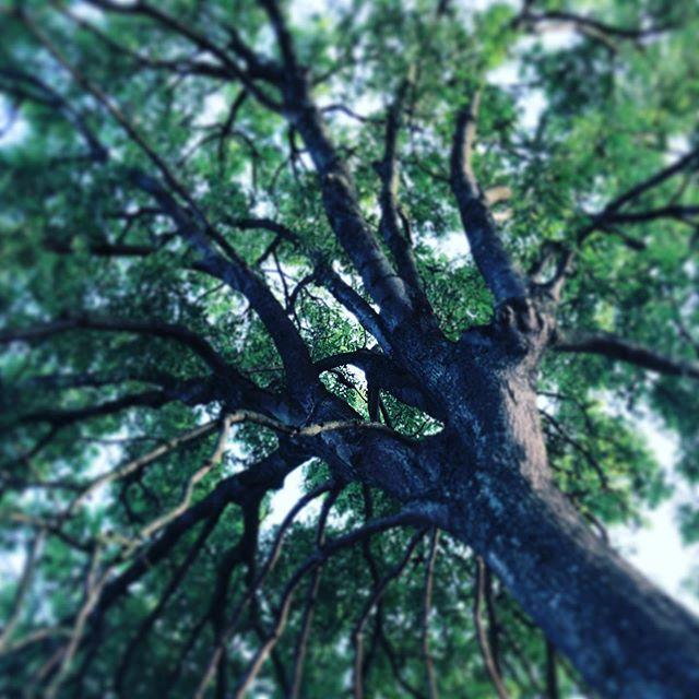 Tree of tree