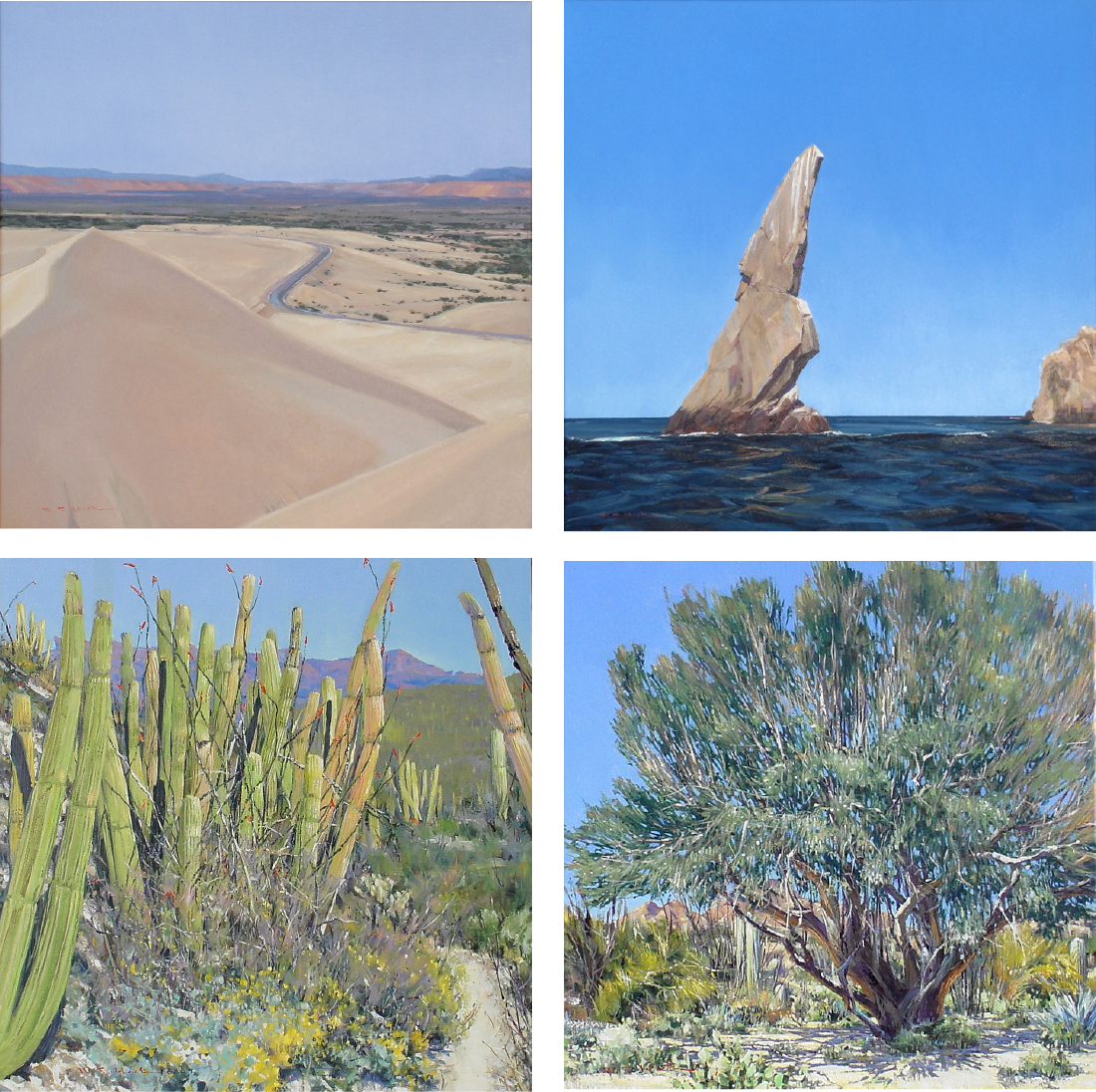 Line in the Sand 24 x 24  Tropic of Cancer 24 x 24 Organ Pipe 24 x 24 Ironwood Tree 24 x 24   Permanent Collection - Arizona-Sonora Desert Museum