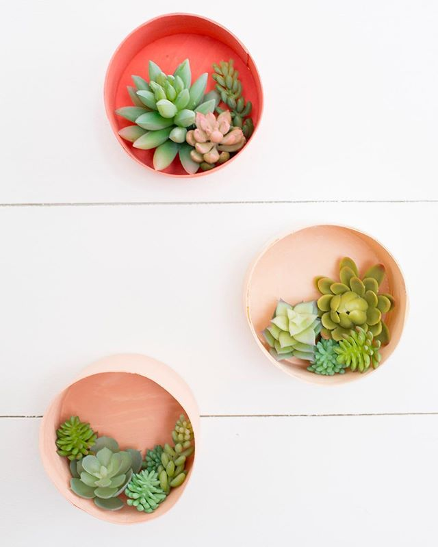 You should faux sure try making this sweet trio of succulent holders. No dirt, no water, no dead plants in two months. It's a crafting win-win. 💕#succulents #faux #planters #spring