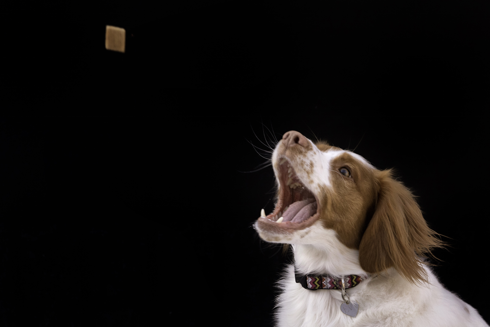 This Pet Camera Is the Ultimate 'Treat' for Dog Lovers Everywhere