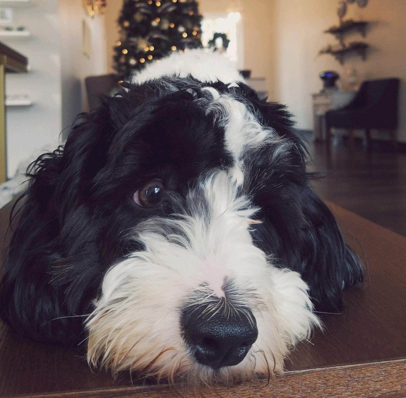 eye-doctor-winston-salem-office-dog.jpg