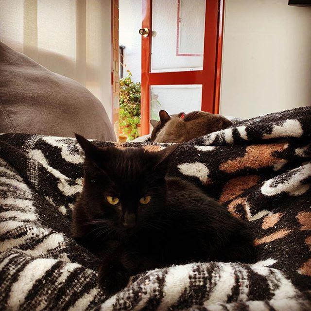 Mis amores Sabrina y Alanís. Mis hijas peludas. 😻😻😻 #gatos #gatas #cats #catsofinstagram #bogota #bogota #colombia