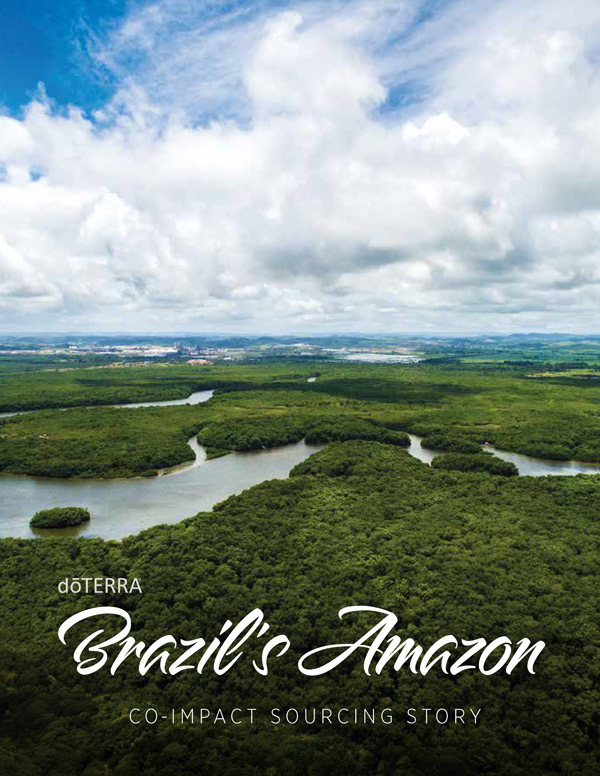 View Brazil Sourcing Brochure