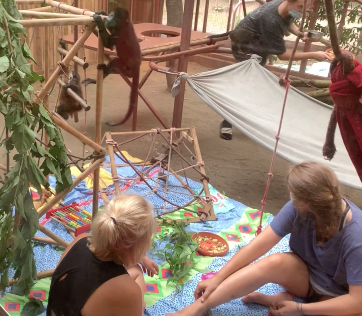 Volunteers caring for baby monkeys at the Jaguar Rescue Center.