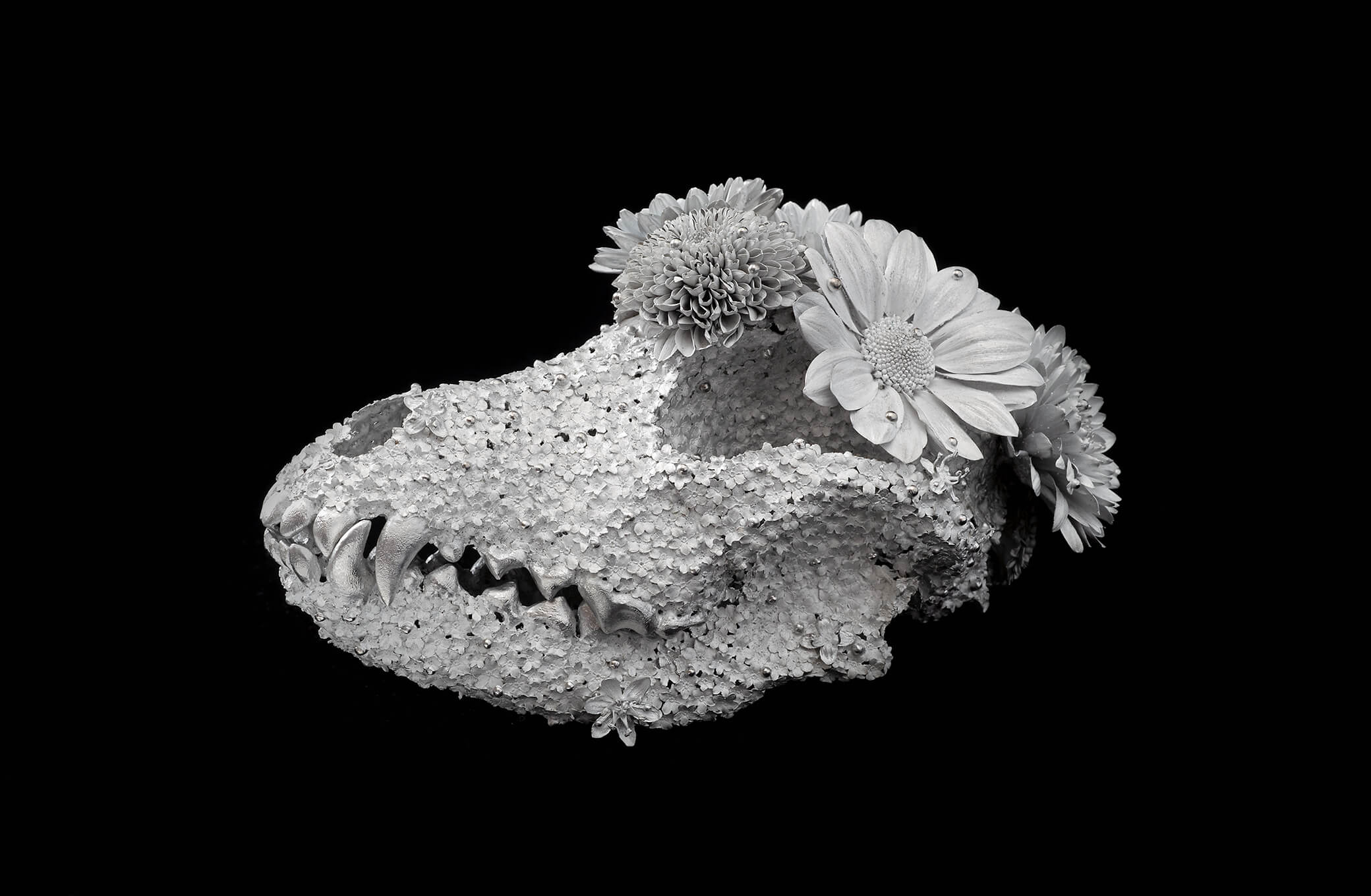 Kengo Takahashi, Flower Funeral - Airedale-, 2018