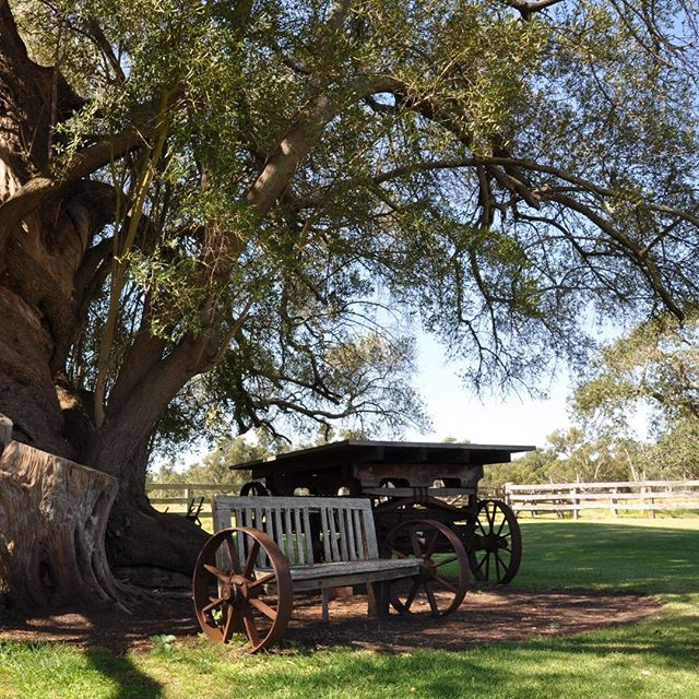 A rustic love seat in the shade of an ancient tree 🙌 What a beautiful spot for a country wedding 💛 #twocentpros
