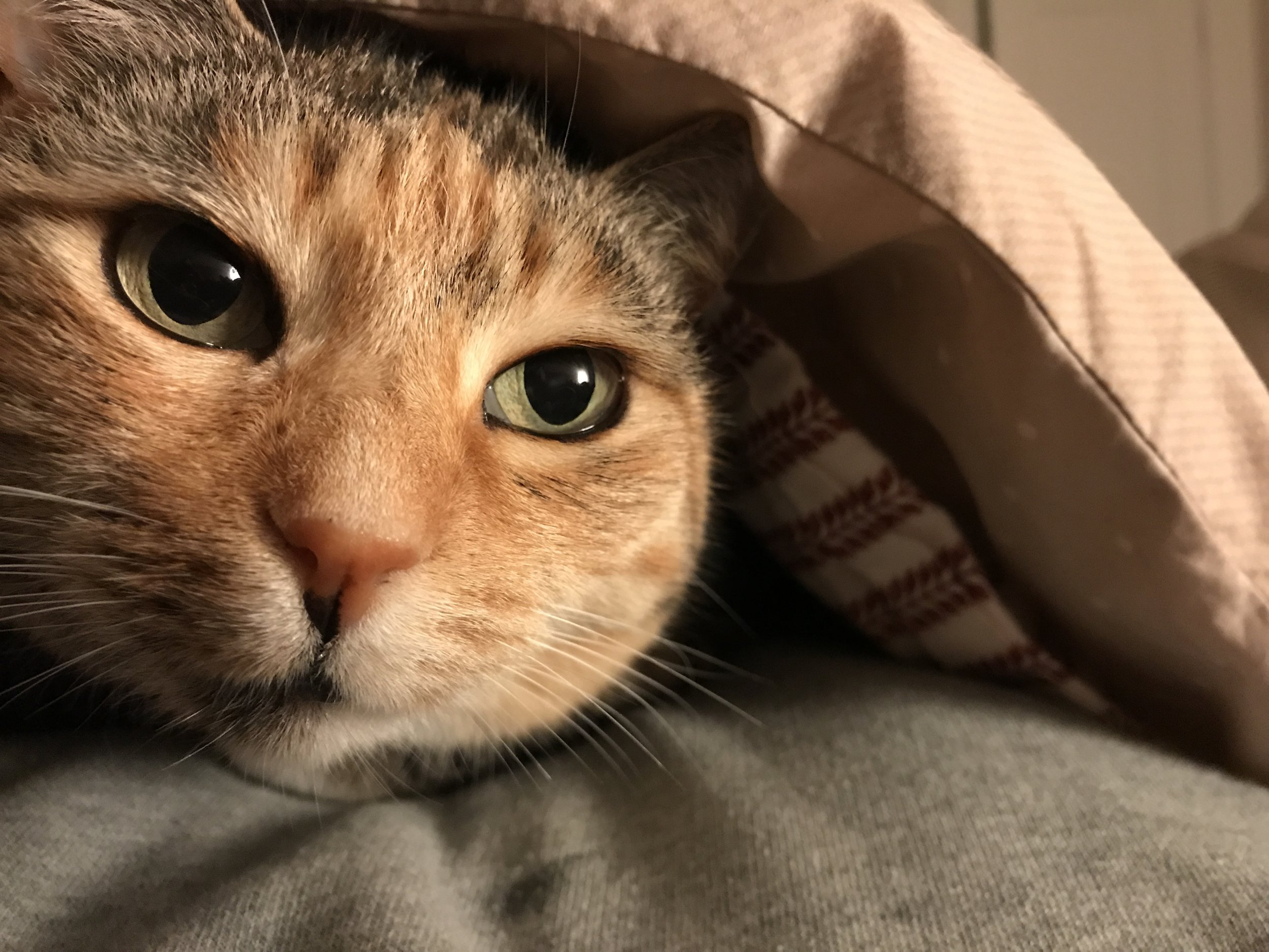 Kitty gets cold and gets under the covers with Andy