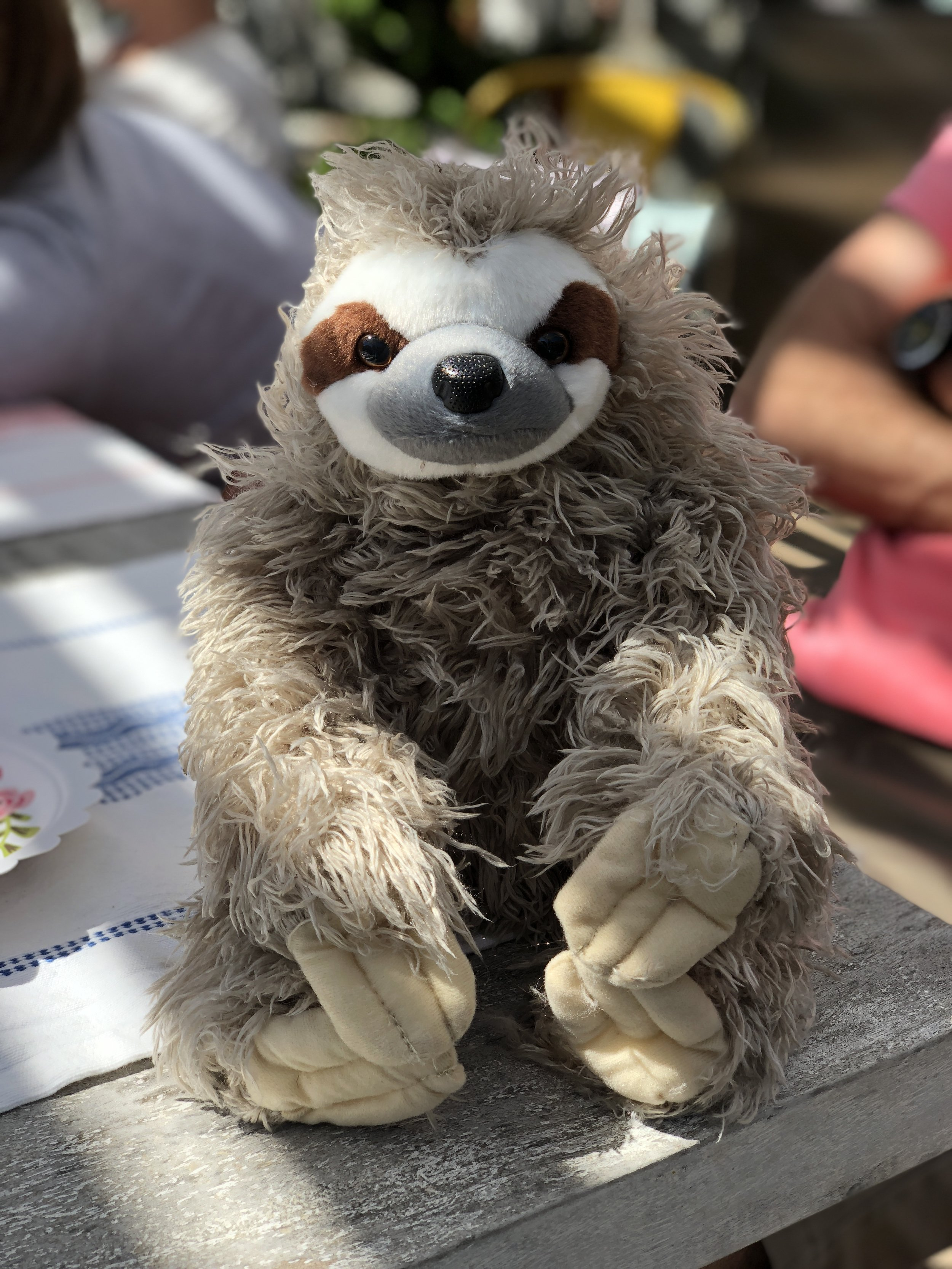 Joseph's aunt, Mary, gave Andy a plush sloth. Here he is, dramatically shot.