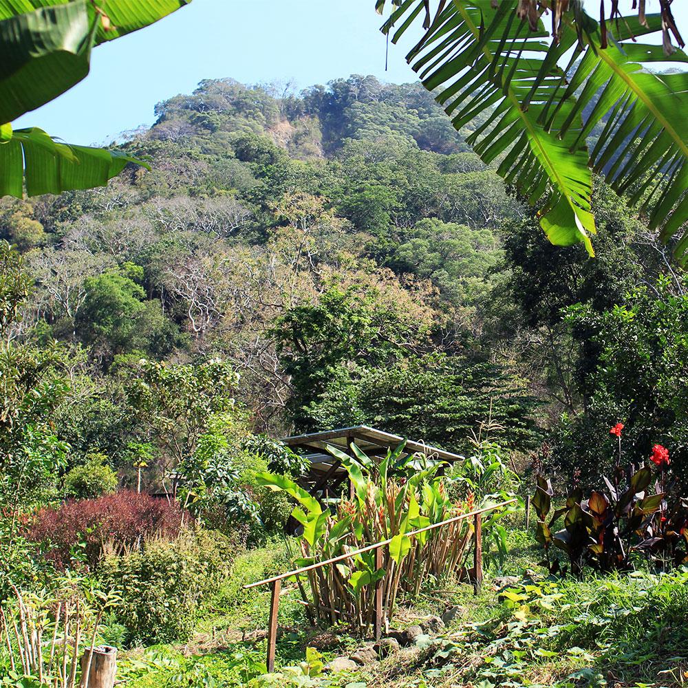 Eden-Hope-Vanuatu-Gardens.jpg