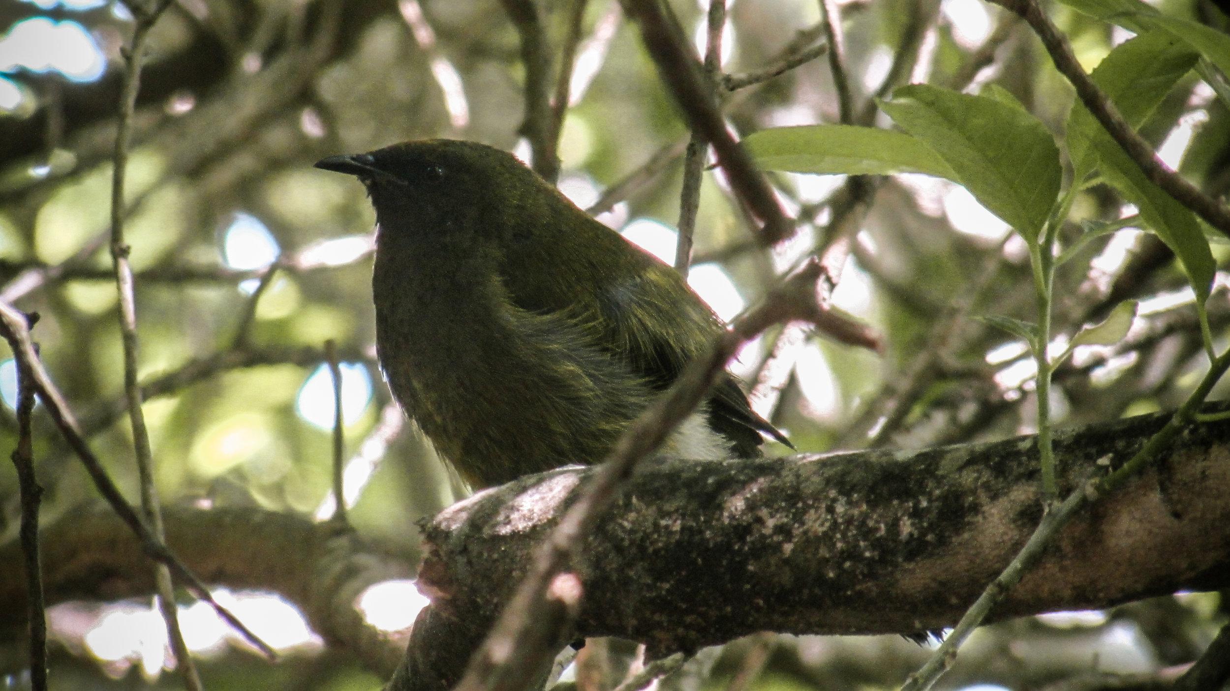 Blumine Island - Marlborough Sounds